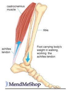 Colorado Stem Cell Therapy achilles tendon3 - Blog