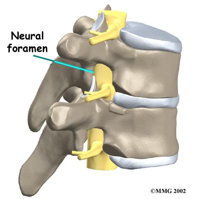 neural-foramen
