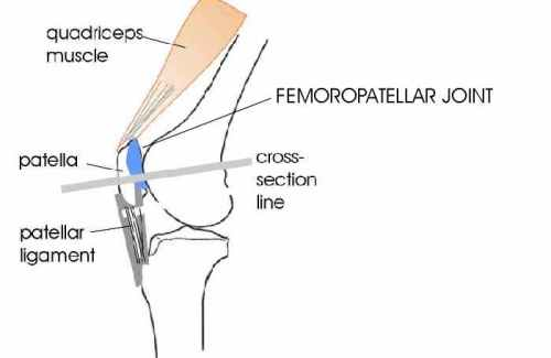 patellofemoral-joint