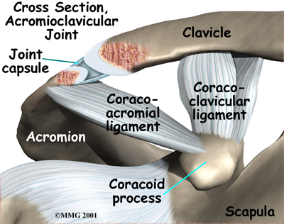 Acromioclavicular Joint and Ligaments