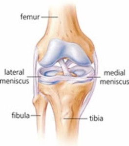 Colorado Stem Cell Therapy knee meniscus - Nip and Tuck of Meniscus:  Advancing The Degenerative Cascade