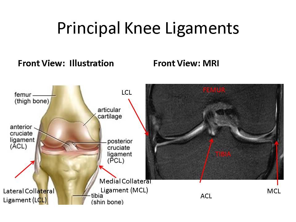 Knee Ligaments: MRI review and treatment options | Stemcelldoc\'s Weblog