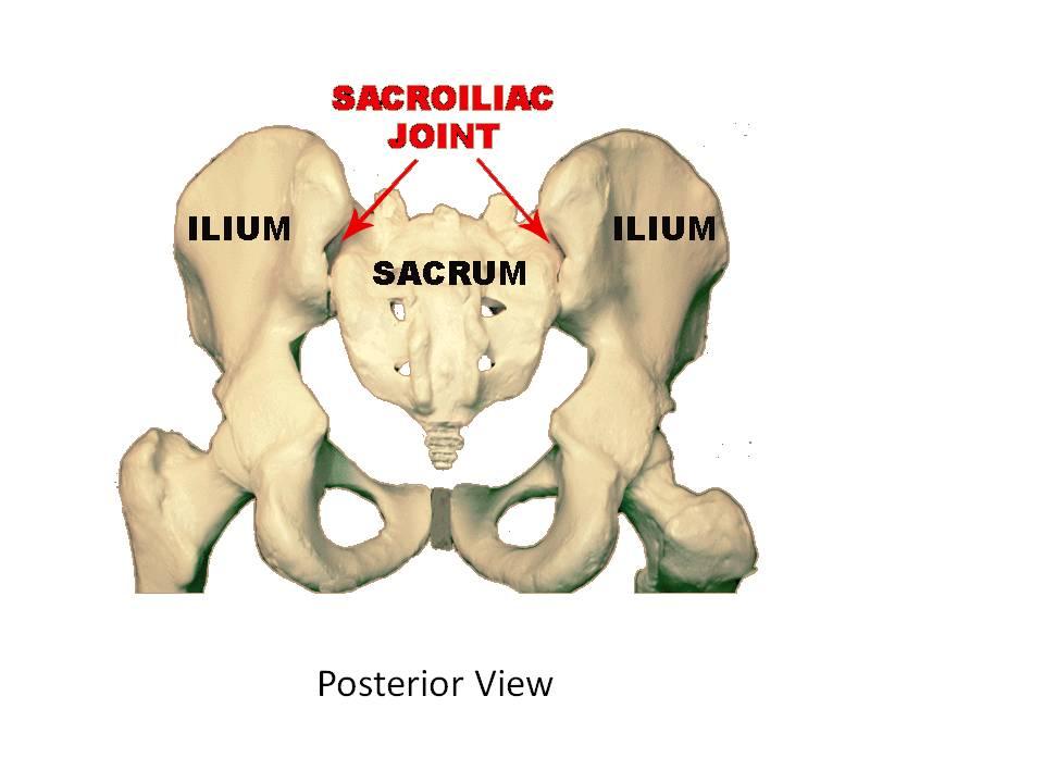 Sacral Spine Stemcelldoc S Weblog
