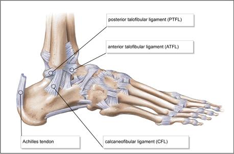 anterior-talofibular-ligament.jpg