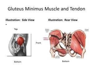 Gluteus Minimus Tendon